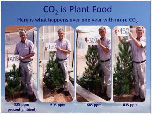 dennengroei met verschillende CO2-concentraties